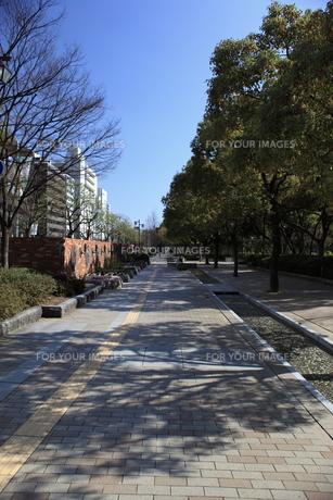神戸市フラワーロードの並木歩道 の写真素材 [FYI00107849]