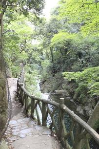 布引公園 登山道の写真素材 [FYI00107854]