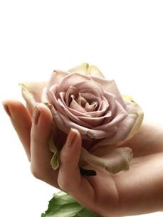 バラを持つ手の素材 [FYI00107902]