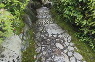 日本庭園 苑路 延べ段の写真素材 [FYI00107924]