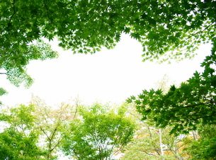 緑の葉に囲まれたメッセージスペースの素材 [FYI00108570]