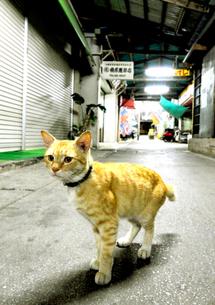 アーケードの猫の写真素材 [FYI00108706]
