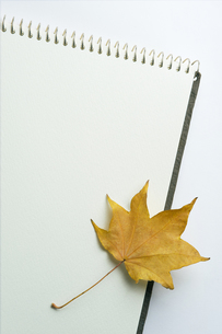 sketchbook and Fallen leafの写真素材 [FYI00108765]
