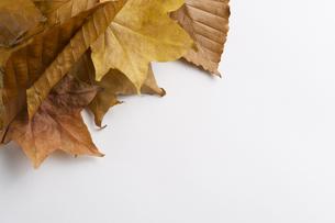 様々な紅葉の写真素材 [FYI00108774]