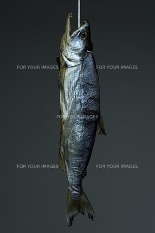 鮭トバの写真素材 [FYI00108779]