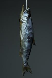 鮭トバの素材 [FYI00108779]