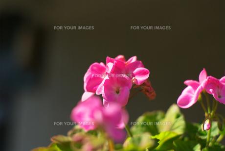 春の花の素材 [FYI00108801]