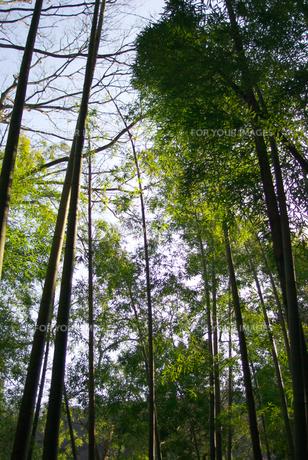 森林浴の素材 [FYI00108803]