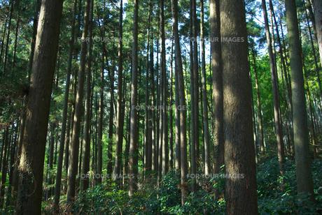 森林の素材 [FYI00108815]