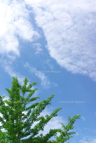 初夏の空の素材 [FYI00108830]