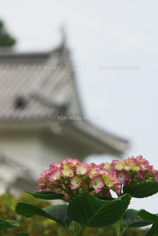 紫陽花と小田原の門の素材 [FYI00108832]