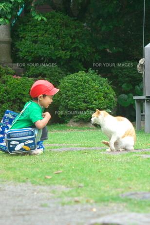 幼稚園児と猫の素材 [FYI00108843]