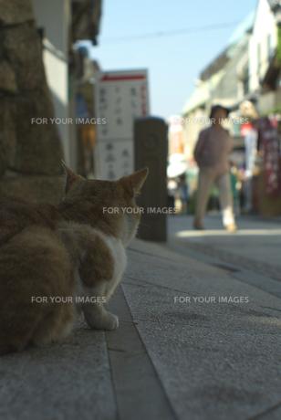 江ノ島の猫の素材 [FYI00108868]