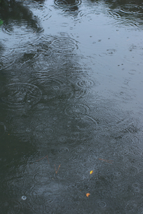 雨と水溜りの素材 [FYI00108873]