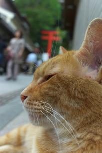 江ノ島の猫の素材 [FYI00108894]