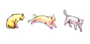 猫三匹の写真素材 [FYI00108896]
