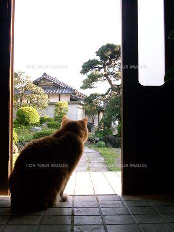 園を眺める猫の素材 [FYI00108978]