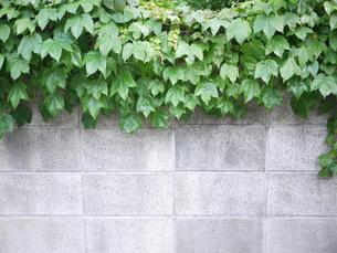 垣根の写真素材 [FYI00108983]