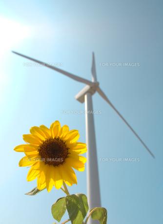 風車と向日葵の素材 [FYI00109032]