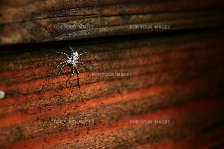 蜘蛛の写真素材 [FYI00109402]