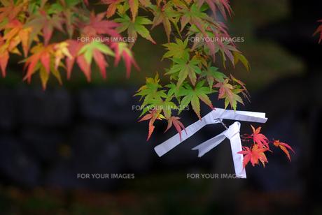 境内の秋の写真素材 [FYI00109461]