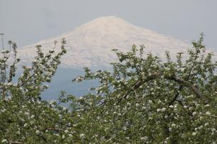 りんごの花と鳥海山の写真素材 [FYI00109476]
