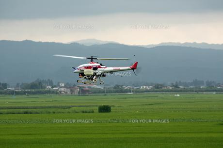 無線ヘリコプターによる農薬散布の写真素材 [FYI00109485]