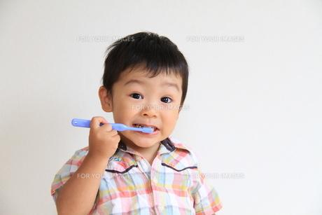 歯磨きをする男の子の写真素材 [FYI00109778]