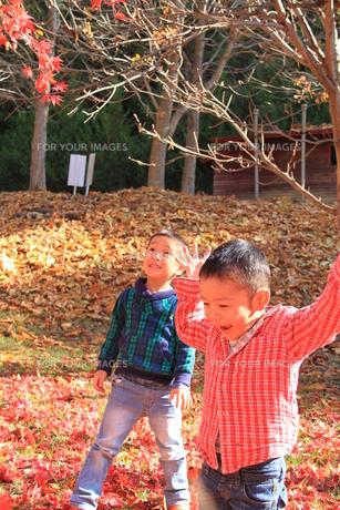 紅葉で遊ぶ兄弟の写真素材 [FYI00109956]