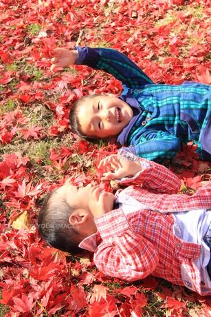 紅葉で遊ぶ兄弟の写真素材 [FYI00109979]