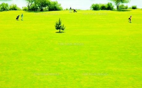 ゴルフ仲間3人がフェアフェーを歩くの写真素材 [FYI00110021]