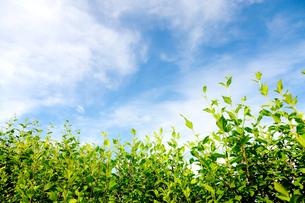 緑野草と青空の素材 [FYI00110030]