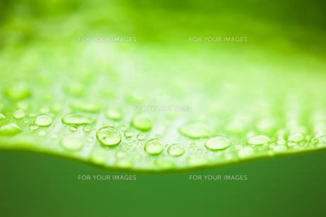 グリーンとしずくのクローズアップの素材 [FYI00110036]