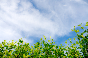 緑野草と青空の素材 [FYI00110040]