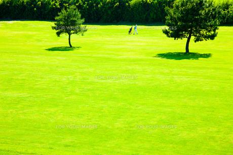 ゴルフ場のフェアフェーを歩く男性ゴルファーの写真素材 [FYI00110043]