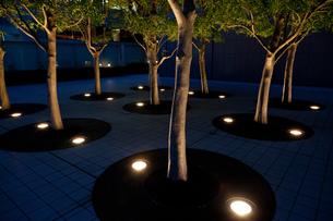 新宿サザンテラス遊歩道の観葉植物ライトアップの写真素材 [FYI00110049]