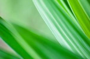 緑野草のクローズアップの写真素材 [FYI00110059]