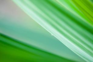 緑野草のクローズアップの写真素材 [FYI00110061]
