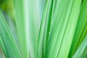 緑野草のクローズアップの写真素材 [FYI00110062]