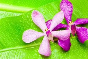 南国の花と植物の写真素材 [FYI00110068]