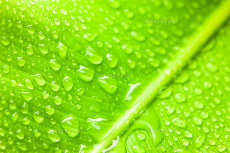 グリーンとしずくのクローズアップの素材 [FYI00110082]
