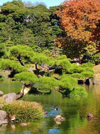 清澄庭園 その2の写真素材 [FYI00110456]