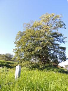 中山道の風景 上豊岡の一里塚跡の写真素材 [FYI00110471]