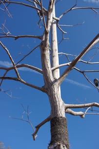 冬の空の写真素材 [FYI00110665]