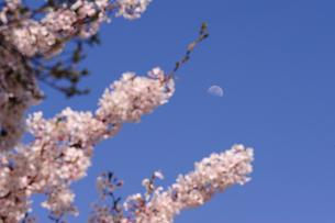 月と桜の素材 [FYI00110937]