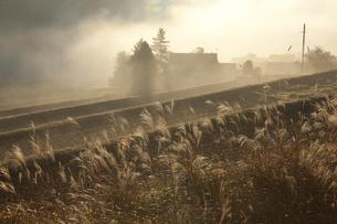 里山の朝の写真素材 [FYI00110978]