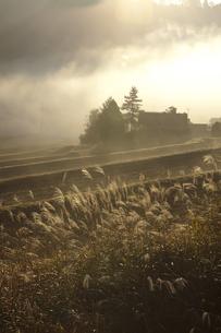 里山の朝の写真素材 [FYI00110986]