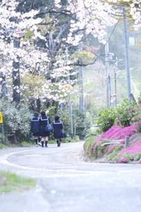 春の写真素材 [FYI00111003]