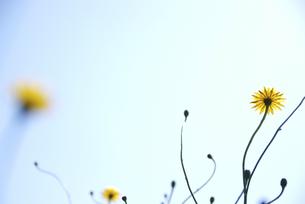 春の花の写真素材 [FYI00111009]