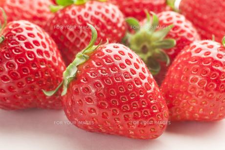 苺 いっぱいの写真素材 [FYI00111493]